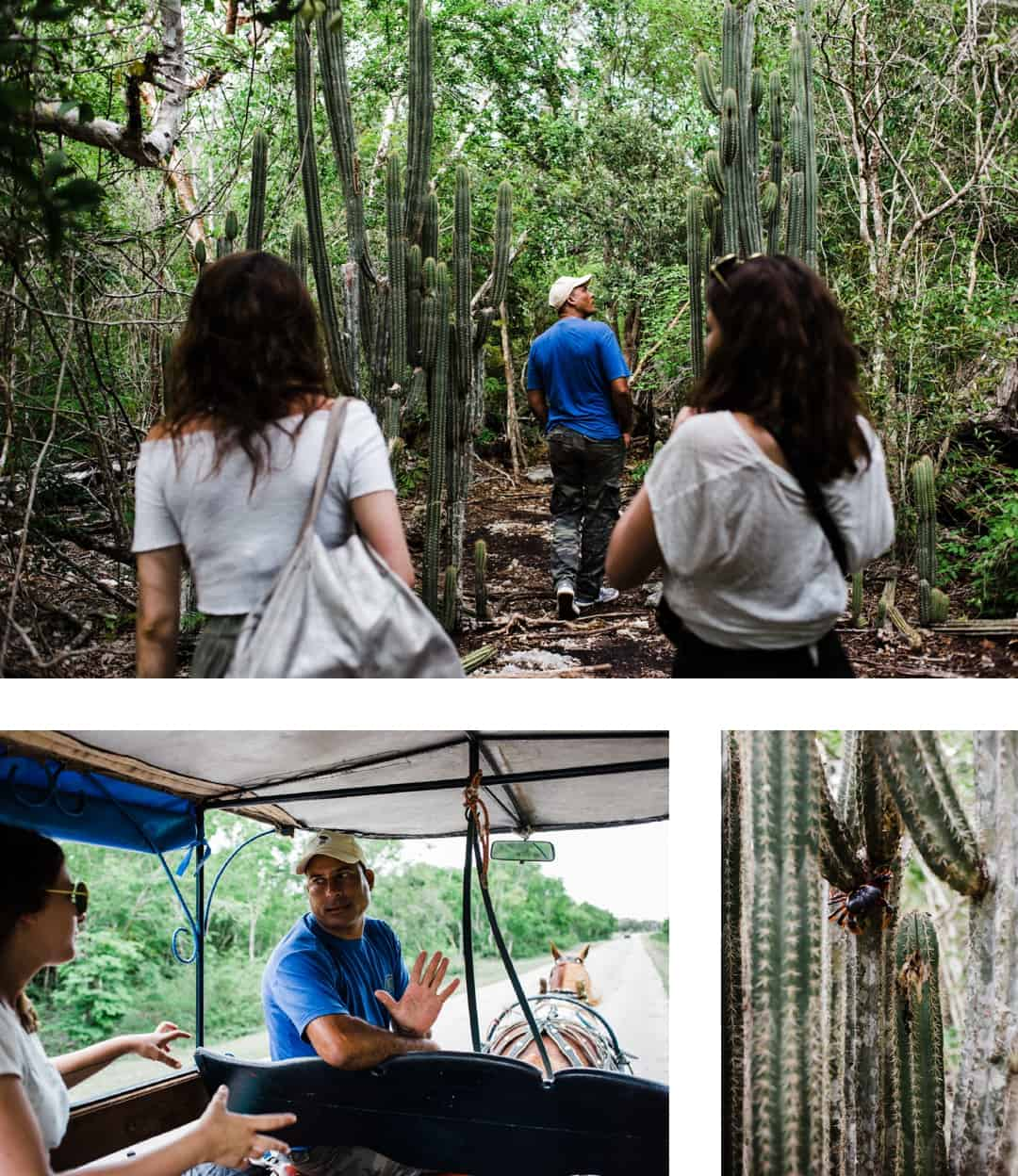Touristic tour in the jungle of Playa Giron